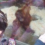 Monkey World Photo