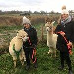Billede af Abbotts View AlpacasAbbotts View Farm