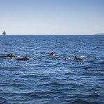 Bottlenose Dolphins  - A K Wildlife Cruises