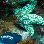 Foto de Calboat Diving - Spectre Dive Boat