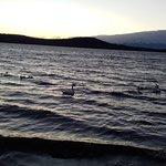 Photo of Lago di Viverone