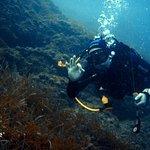 Фотография Blue Diving Center