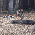 Photo de Australia Zoo