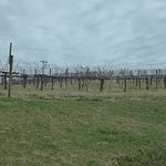 Carter Mountain Orchardの写真