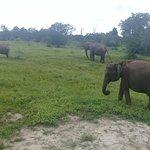 Elephant jeep Safari Day Tour