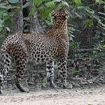 Yala Safari 2 days Tour