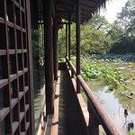 西溪湿地公园の写真