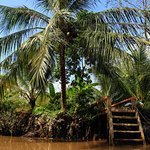 Countryside in Mekong Land  Hieutour's day - www.hieutour.com +84939666156 contact@hieutour.