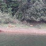Фотография Periyar Wildlife Sanctuary