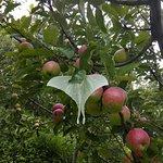 apple orchard outside