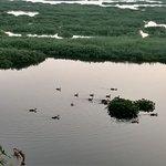 ภาพถ่ายของ Powai Lake
