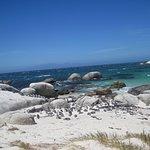 Foto Boulders Beach