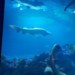 Foto de Blue Planet Aquarium