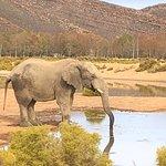 Foto de Aquila Private Game Reserve - Day Trip Safari