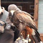 Photo de Walworth Castle Birds of Prey