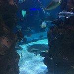 Foto de Aquarium Restaurant