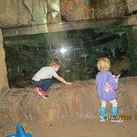 Foto Downtown Aquarium