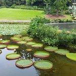 シンガポール植物園の写真