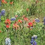 Foto de Bluebonnet Trail