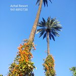 Book Achal Resort an advance for this coming new year 2019