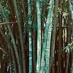 Foto di Royal Botanical Gardens