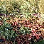 巴黎加丁种植园照片