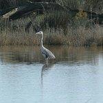 Foto di S'Albufera Wetlands