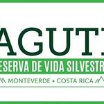 Visit our webpage www.agutimonteverde.com or our Facebook page www.facebook.com/agutimonteverde