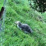Photo of Elm Wildlife Tours