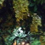 Interior y árboles cercanos
