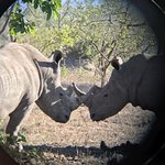 Two white rhinos on our second day in Kruger