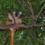 Foto van Lemur Tours