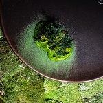 Seabass | seaweed, dill, lardon