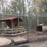 ภาพถ่ายของ Catty Shack Ranch Wildlife Sanctuary