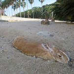 Photo of Okunoshima Island