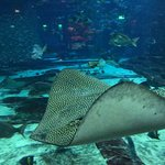 Фотография Дубайский аквариум и подводный зоопарк