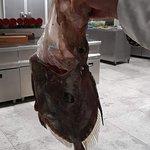 Dragos Balık