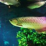 Photo of Vinpearl Land Nha Trang