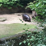 Photo de Berlin Zoological Garden