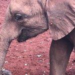 Bild från David Sheldrick Wildlife Trust