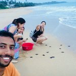 Releasing baby turtle to the sea at Kosgoda Beach.