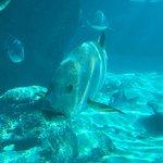 Photo of Predator Lagoon