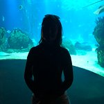 Foto Lisbon Oceanarium