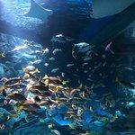 Maxell Aqua Park Shinagawa Photo
