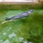 ภาพถ่ายของ Shimoda Aquarium