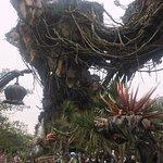 Disney's Animal Kingdom Photo
