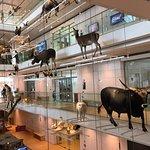 Photo de MUSE - Museo delle Scienze