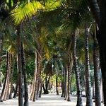 Photo of Surin Beach