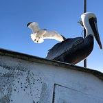 Foto di St. Augustine Wild Reserve
