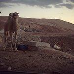 תמונה של Moti Barness Private Guide to Israel